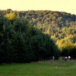 Rezerwat Sokole Góry.