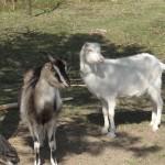 Mela-i-Fela-wypatrują-wiosny