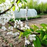 agroturystyka-ogród-i-sad