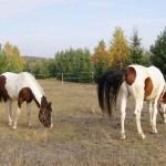konie (10)