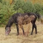 konie (11)