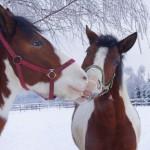 konie (12)