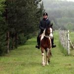 konie (17)