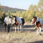 konie (18)