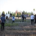 konie (19)