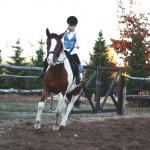 konie (26)