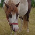 konie (31)