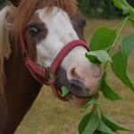 konie (32)