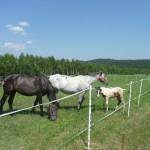 konie (34)